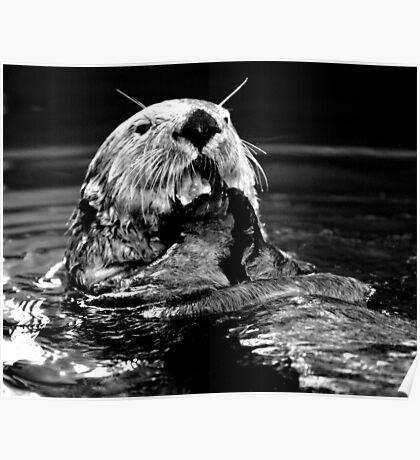 Sea Otter Eating Poster