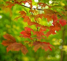 Red autumn leaves by Flux Photography
