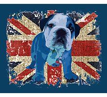 Jack the Bulldog Photographic Print