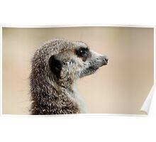 Meerkat Duties Poster