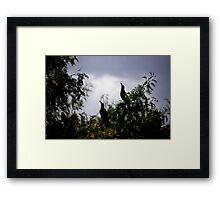 Grackles Framed Print