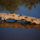 Log Reflection by Tam Ryan