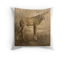 ROAN ANTELOPE 4 (NOT A PHOTOGRAPH OR PHOTOMANIPULATION) Throw Pillow