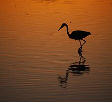 Egret at Sunset by Tam Ryan