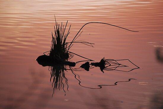 Sunset Reflection by Tam Ryan