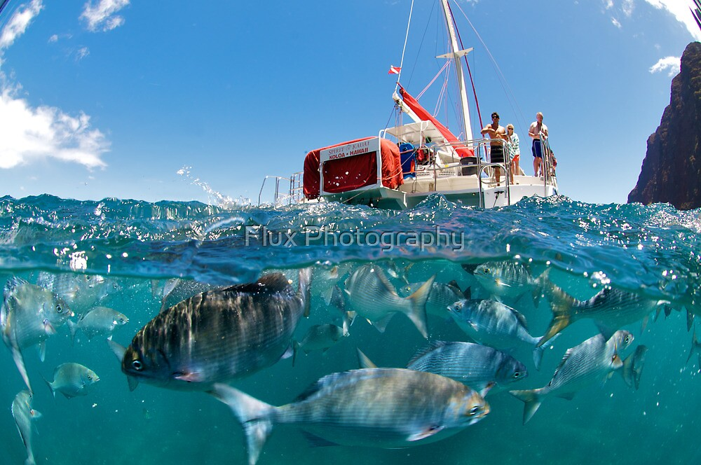Feeding Frenzy by Flux Photography