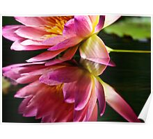 reflection of a pink water lily Poster