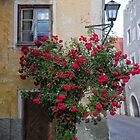 Door and Red Roses by Yair Karelic