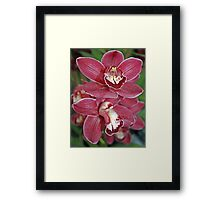 """red orchids"" Framed Print"