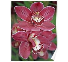 """""""red orchids"""" Poster"""