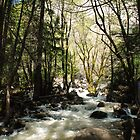 Yosemite National Park Stream by kieranmurphy