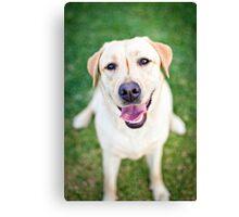Inara the Labrador Retriever Canvas Print