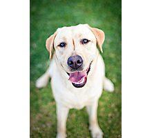 Inara the Labrador Retriever Photographic Print