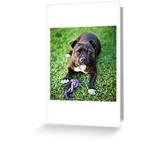 Molly the Staffordshire Bull Terrier Greeting Card