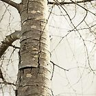 Winter bark & branches by Steph Ball