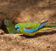 digging a nest by Steven Guy