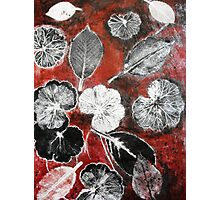 November's Garden  1 - Monoprint Photographic Print