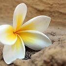 Vanila Flower by Ad-Astra
