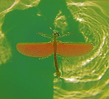 Greenfly! by NICK COBURN PHILLIPS