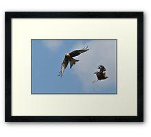 Red Kites Framed Print
