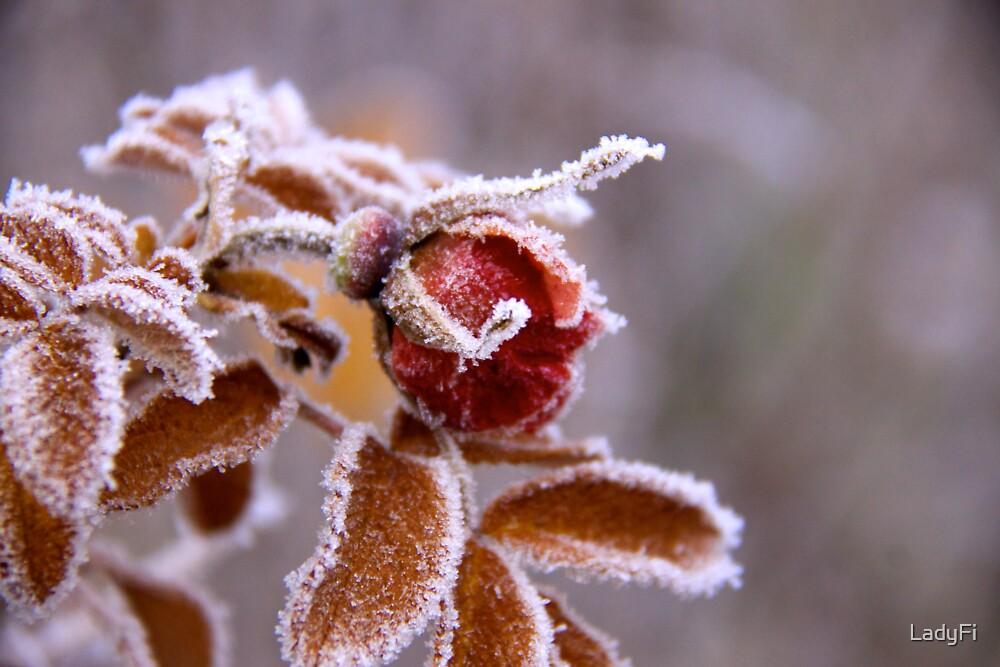 Winter jewel by LadyFi