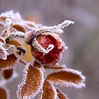 Winter jewel by LadyFi