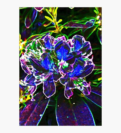 A Psychedelic Rhododendrum Photographic Print