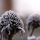 Winter twins by LadyFi