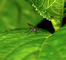 ~Thirsty Little Fly~ by a~m .