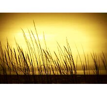 Beach Grass Photographic Print