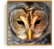 Wise Bird Canvas Print