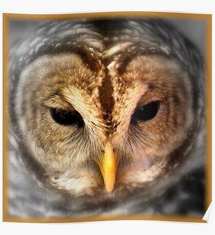 Wise Bird Poster