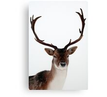 Winter Stag 1 Canvas Print
