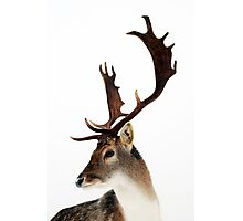 Winter Stag 2 Photographic Print