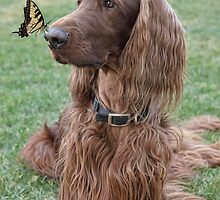 Phantom & the Butterfly II by Ann J. Sagel