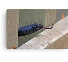 THE SNAKE (FORKED TONGUE CREATURE) Canvas Print