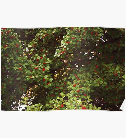 HOLLY TREE Poster