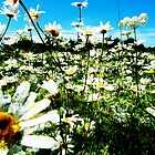 Daisy's Field by Brian Damage