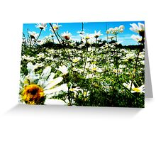 Daisy's Field Greeting Card
