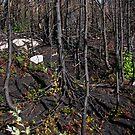 Burn Zone at Jackfish Ontario Canada on Lake Superior by loralea