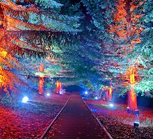 Electric Forest 12 by orion976