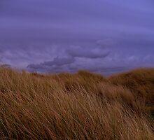 Bull Island by Alan Reid