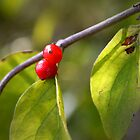 Red Fruits by Milena Ilieva