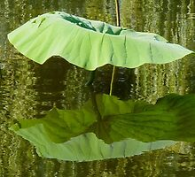 NATURE'S PARASOL by Marilyn Grimble