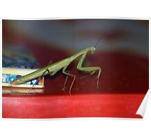 The praying mantis Poster