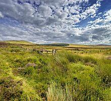 The Fence by Jeremy Lavender Photography