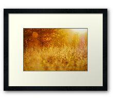 Autumn meadow Framed Print