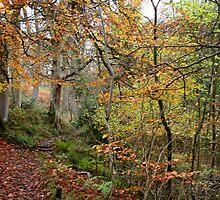 Tangled in falling foss by Merice  Ewart-Marshall - LFA