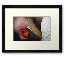 Pelican 3 Framed Print