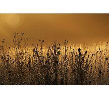 misty dawn in sleeping deer meadow Photographic Print